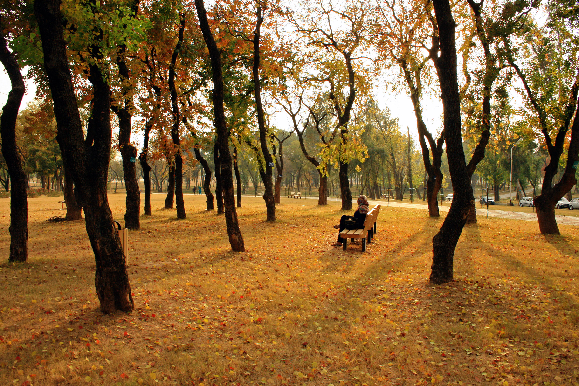 Autumn in Islamabad, Pakistan - by Muzaffar Bukhari