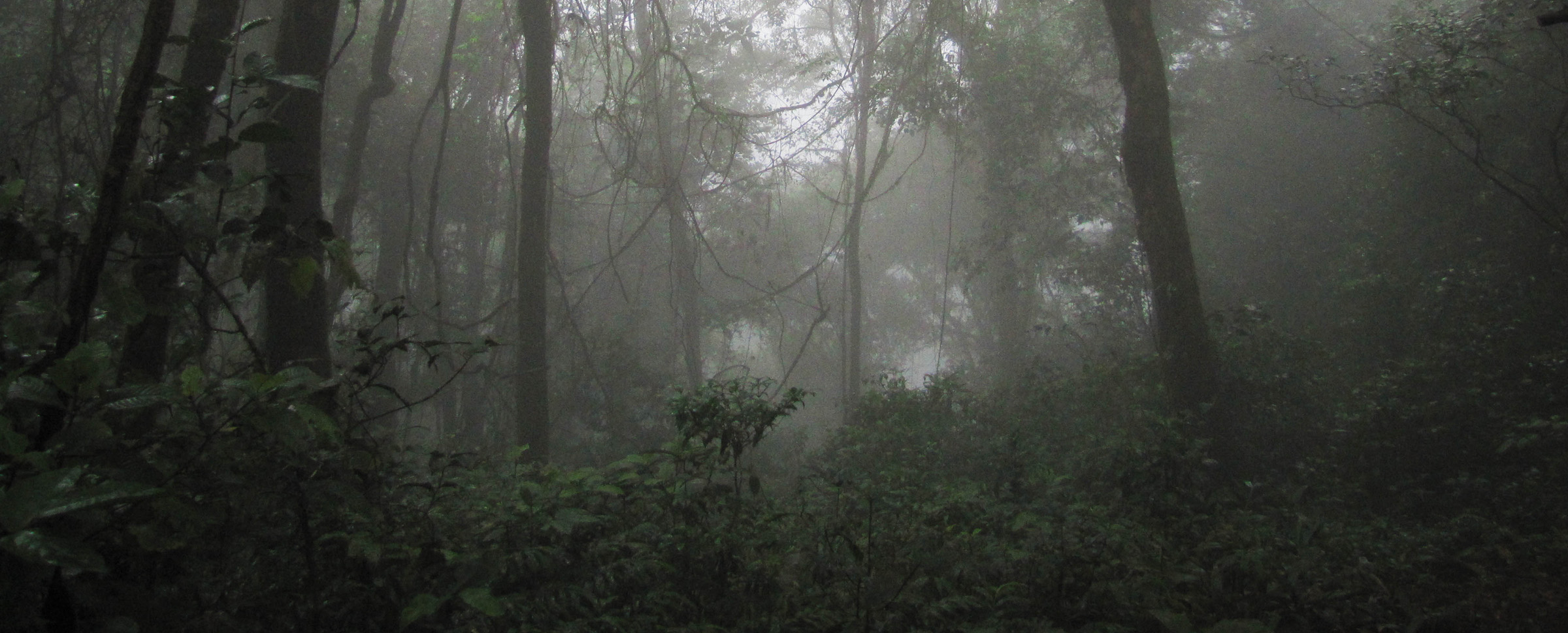 Forest in Equatorial Guinea - by NathanaelStanek
