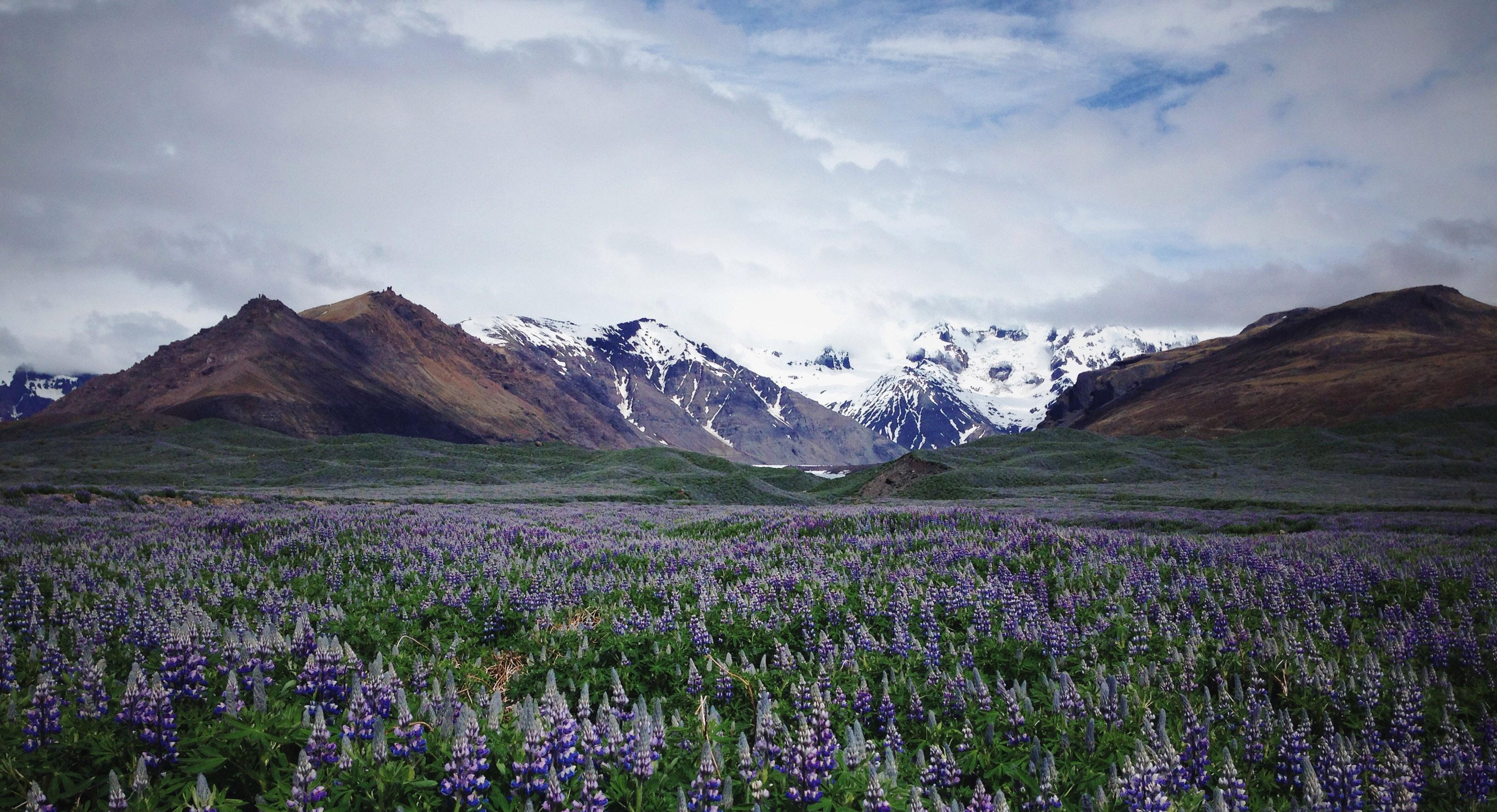 Iceland - Laura Aziz