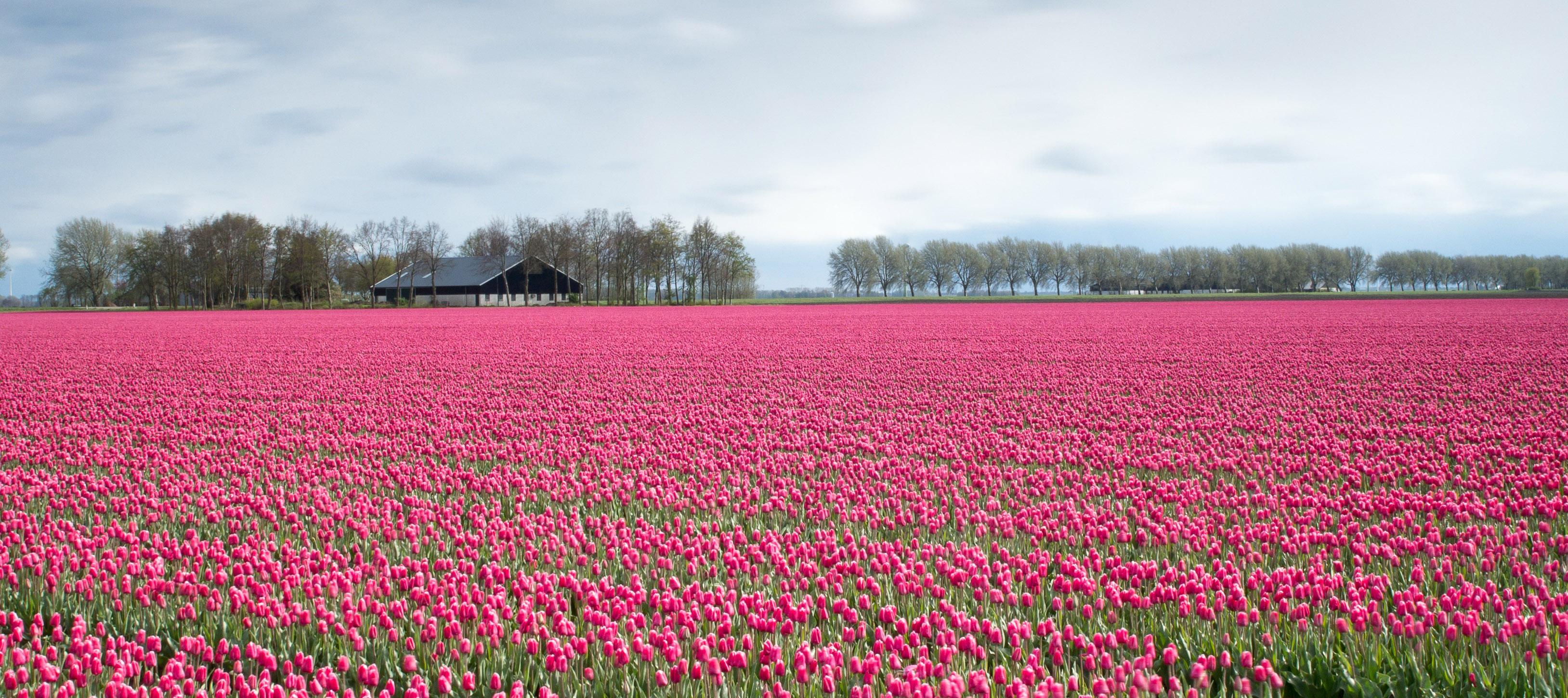 Lelystad Airport, Lelystad, Netherlands - Eddie Hooiveld