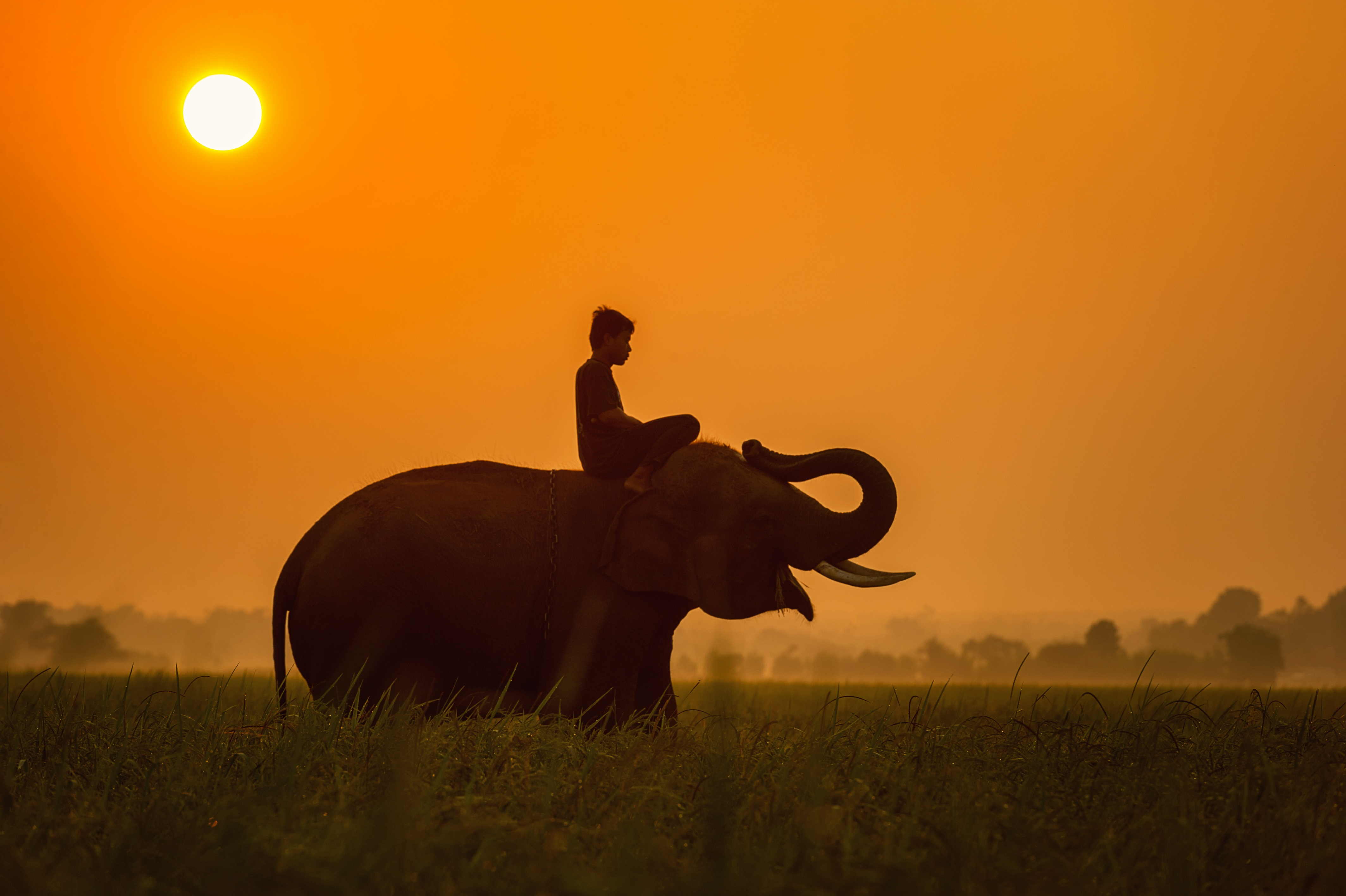 Man riding an Elephant in Cambodia - sasint
