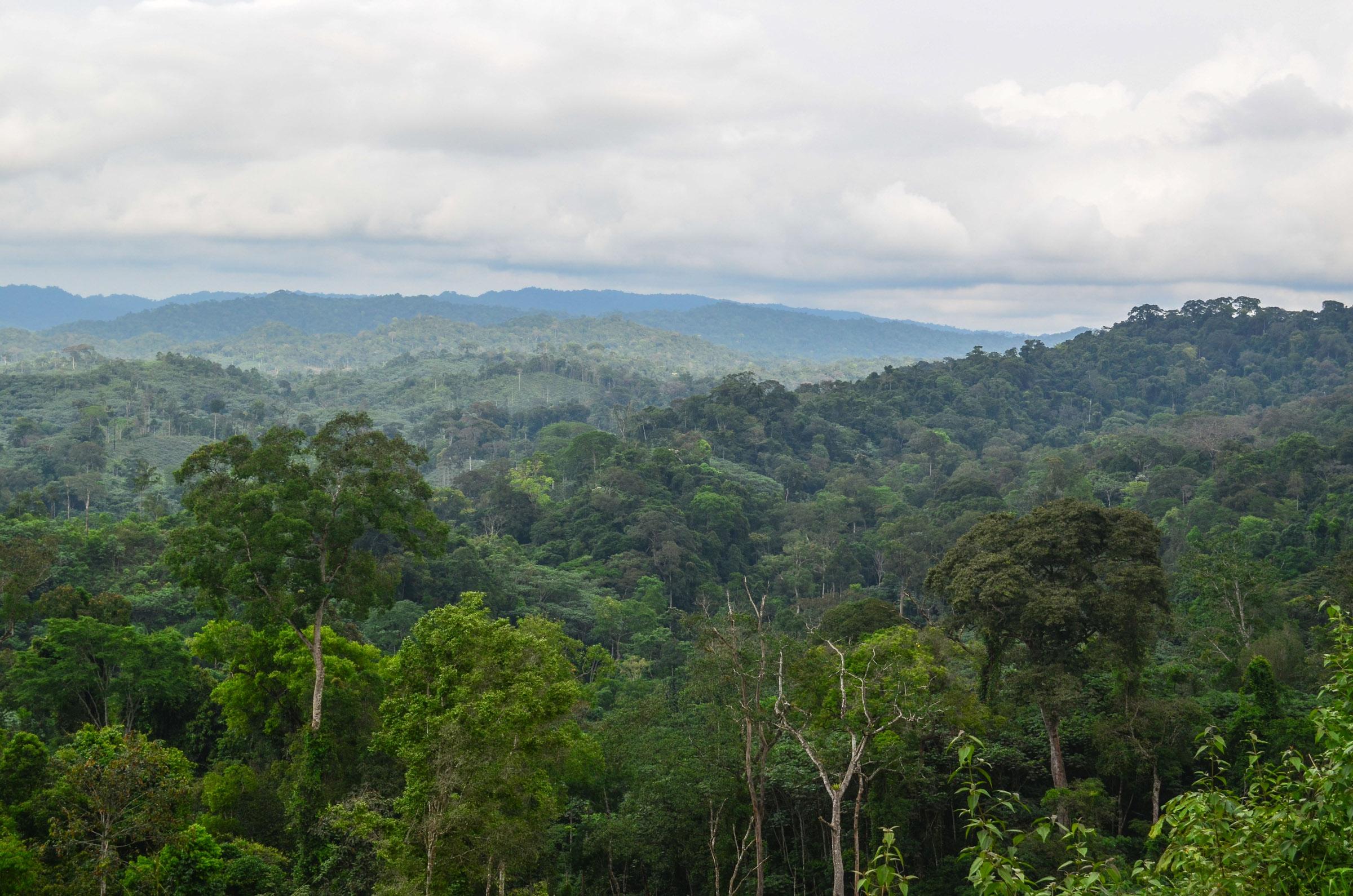 Massif du Mayombe, Republic of the Congo - by jbdodane