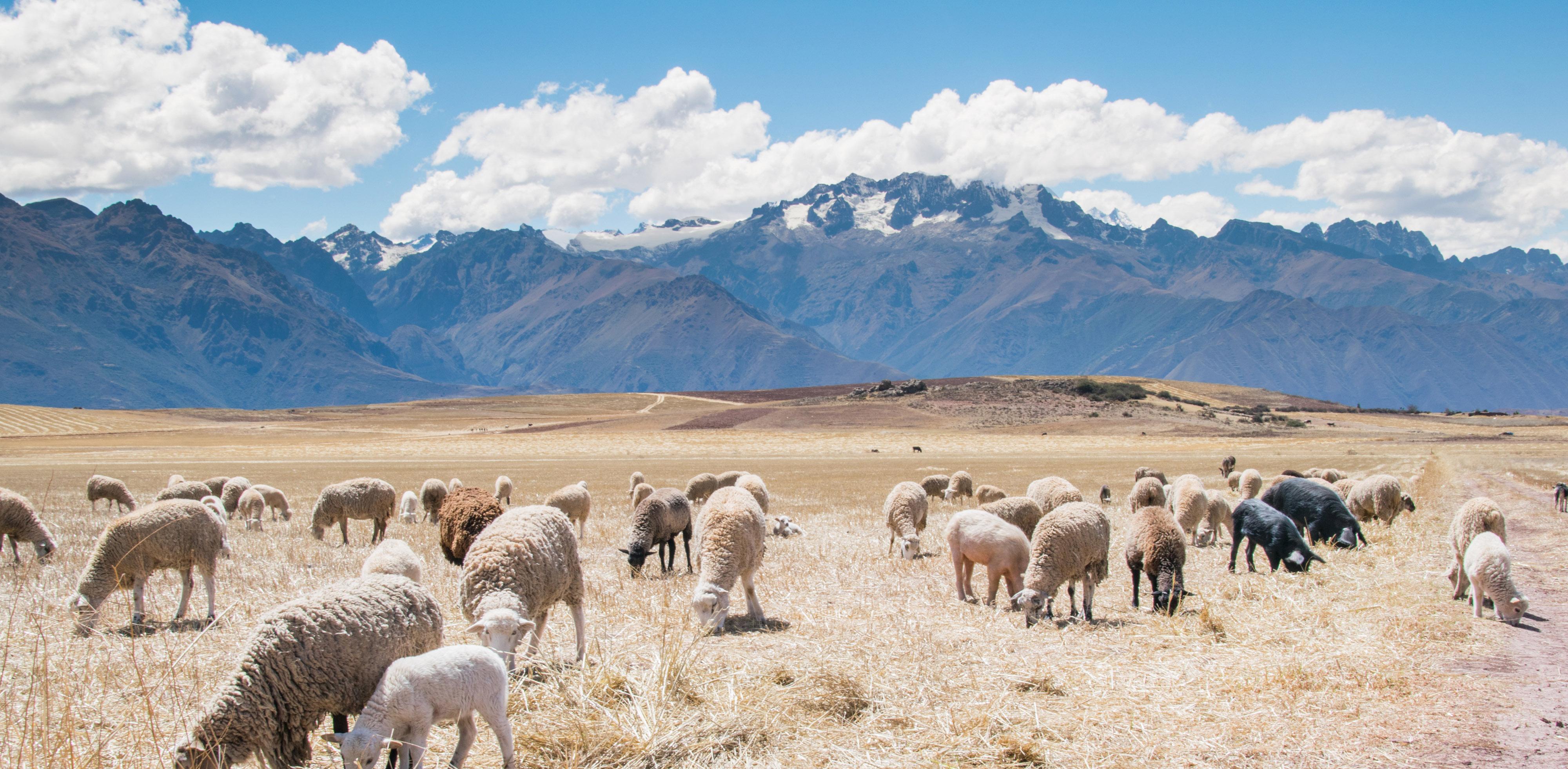 Ollantaytambo, Peru - Blake Richard Verdoon