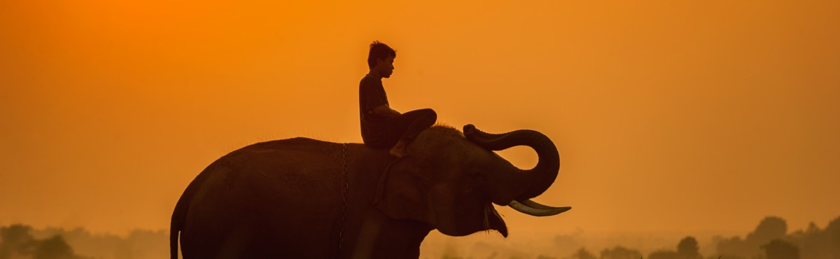 Man riding an Elephant in Cambodia - sasint
