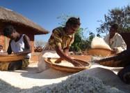 Women threshing sorghum in Mozambique - by ILRI / Mann