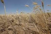 Yields of corn - Moldova (TEN)